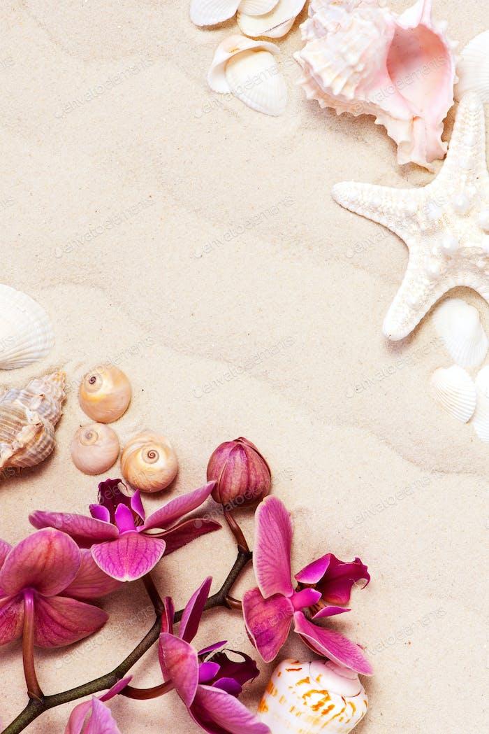 Blühende Orchidee und Muscheln auf dem Sand