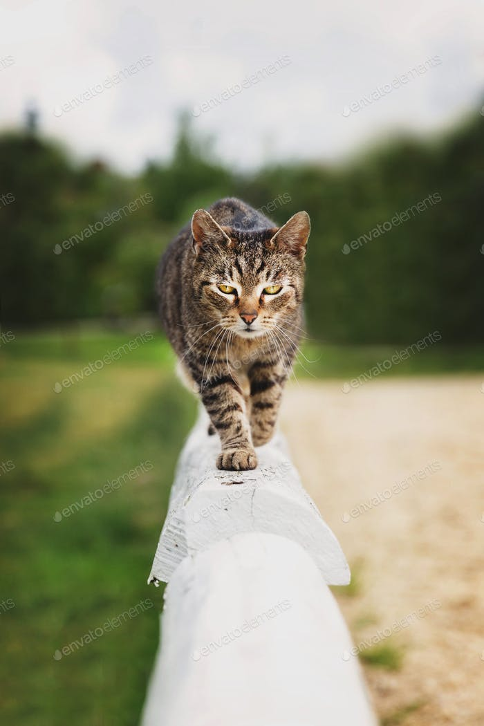 Kitty walking on the wooden fence