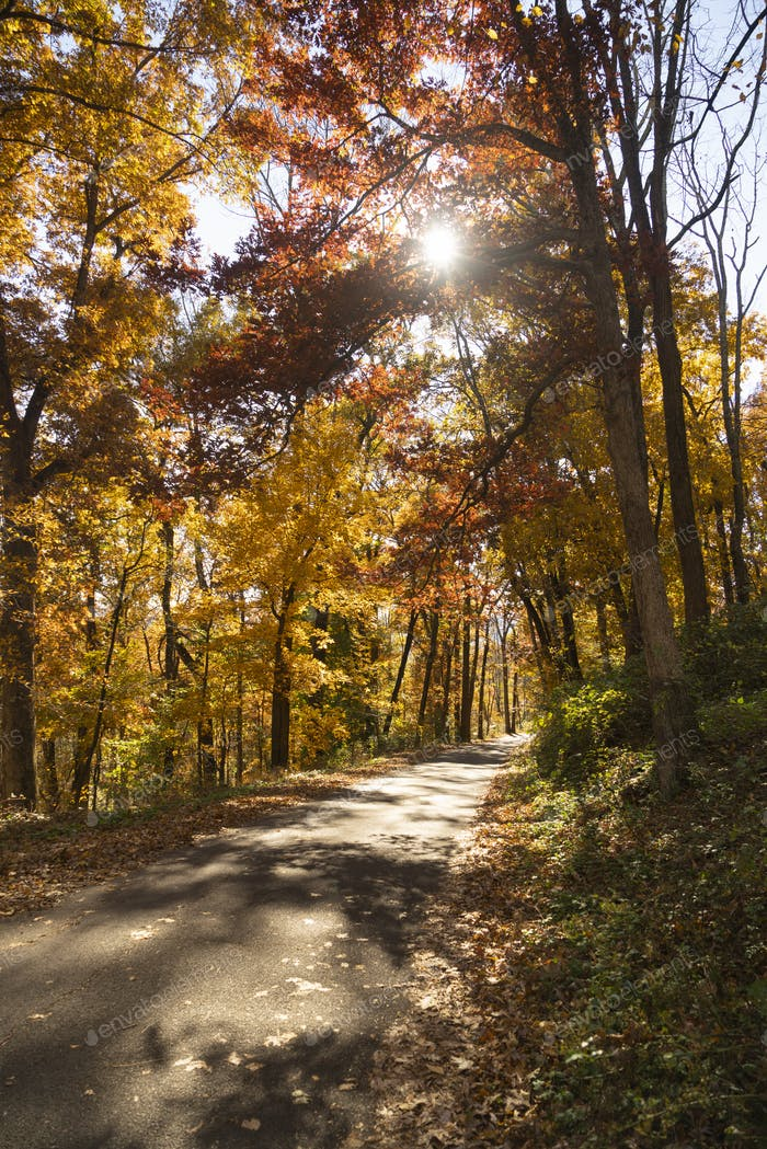Thumbnail for A rural country road travels between trees showing bright fall color