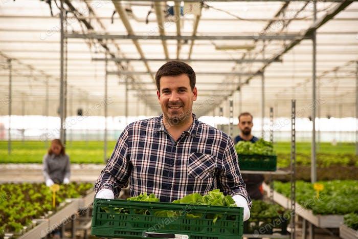 Bauer hält eine Box mit Salat im Gewächshaus