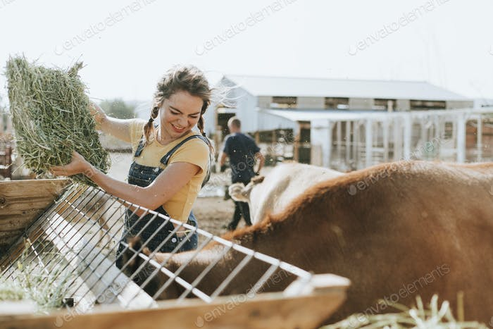 Farmer taking care of animals