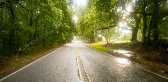 Georgia Farm Road durch niedrige hängende Bäume im regen