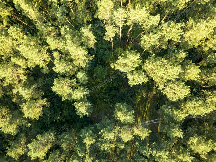 Aerial view of the drone green spaces trees in the summer day. Natural summer background