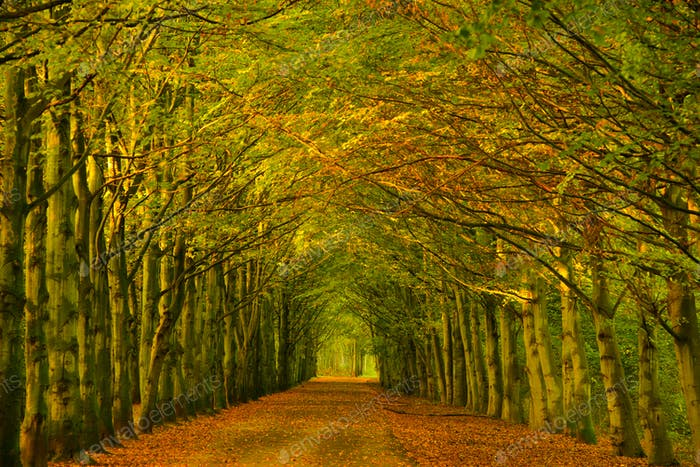 Tree tunnel in a forest