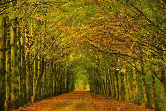 Baumtunnel in einem Wald