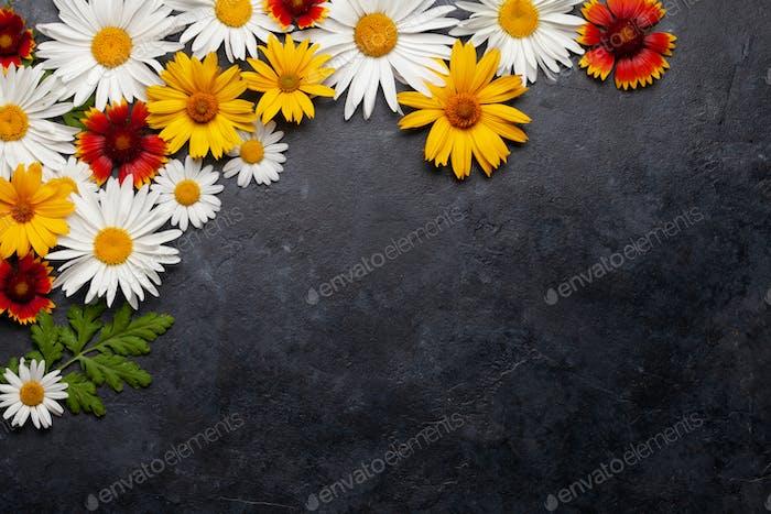 Chamomile flowers background. Garden daisy