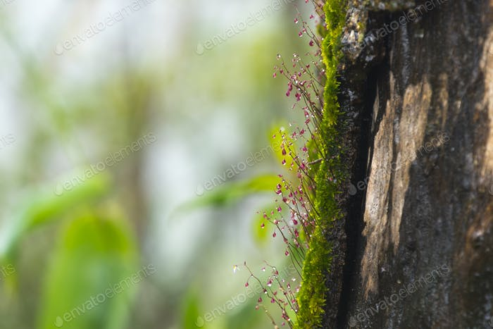Small organisms in tropical forest