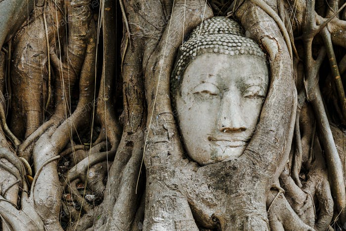 Head of Buddha in a tree trunk, Wat Mahathat