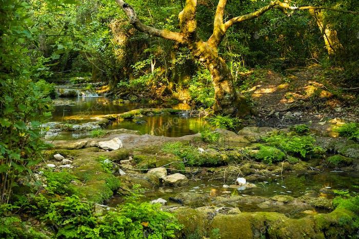 Природный ландшафт горной реки в джунглях.Турция