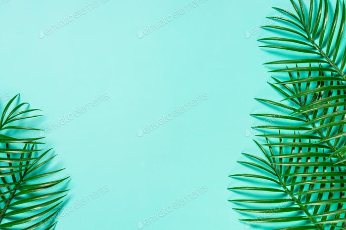 Palm leaves on blue top view