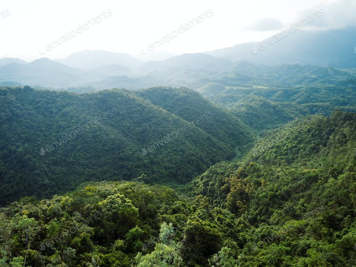 Aerial view of summer rainforest in China
