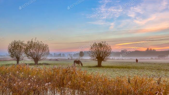 Pollard willows and horses