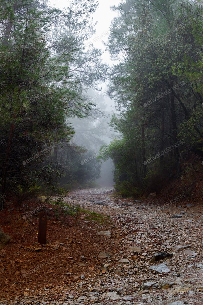 Trail through dark forest in fog
