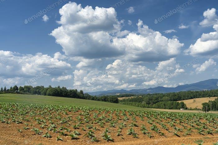 Summer landscape from Citerna, Tuscany, Italy