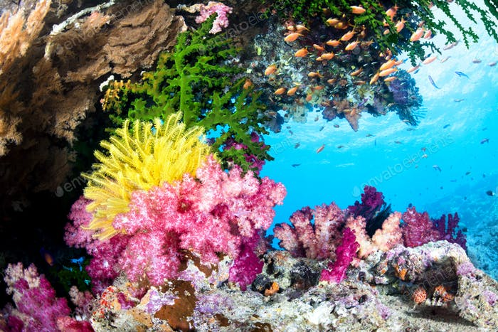 Exotic Coral Reef