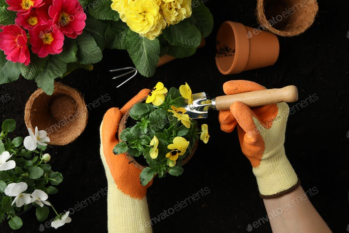 Frau hält Pot. Boden Hintergrund mit Blumen und Gartengeräten, Draufsicht