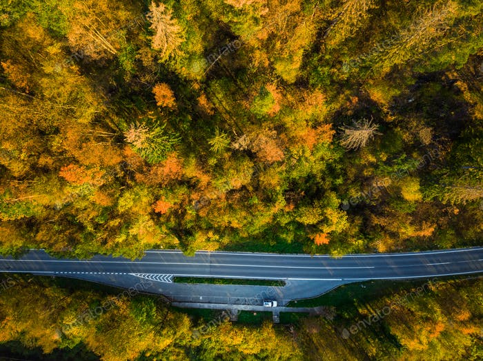 Asphalt road trough forest in fall, top down aerial from above