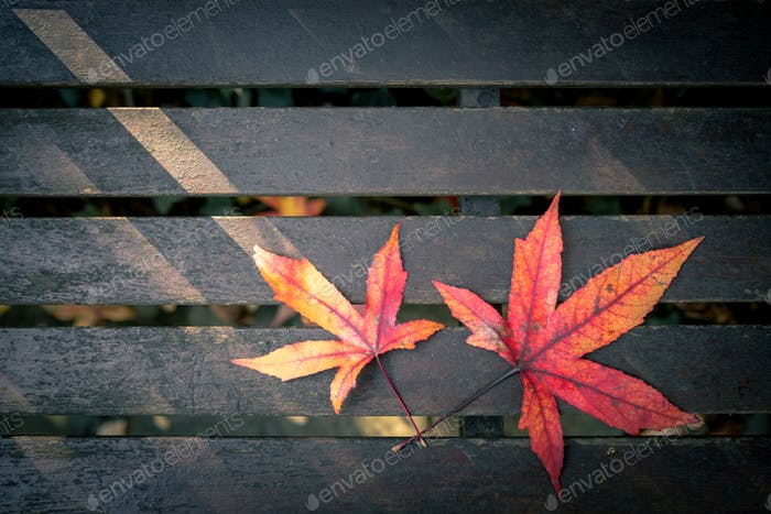 Two red purple and yellow autumn leaves