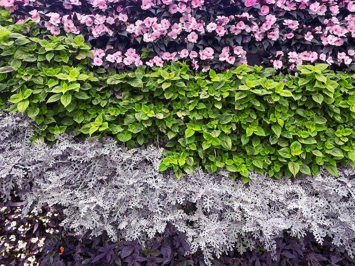 beautiful wall of flowers