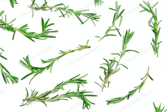 Natural flat lay pattern of rosemary sprigs on white background