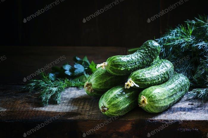 Freshly harvested cucumbers, rural style