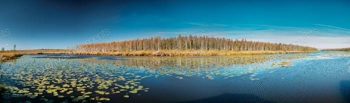 Berezinsky, Biosphere Reserve, Belarus. Autumn Landscape With La