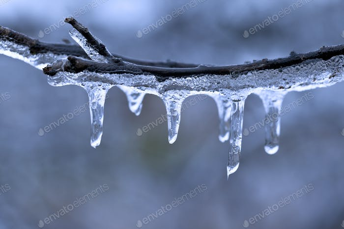 Freezing Rain on Tree Branch