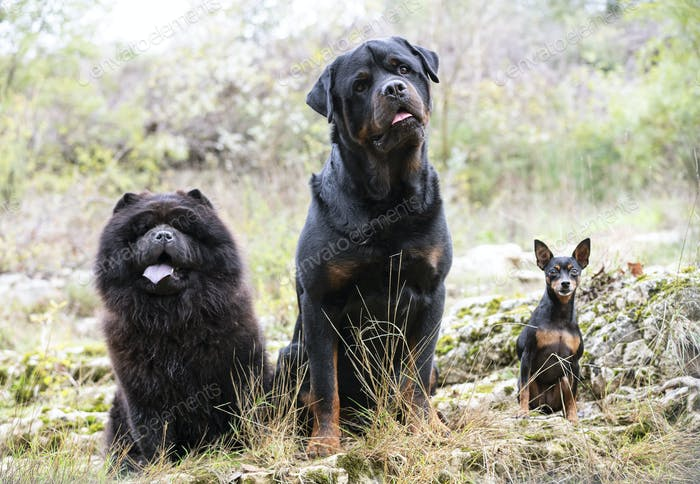 dogs in nature