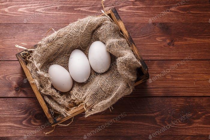 Three big fresh goose eggs in a box, copyspace