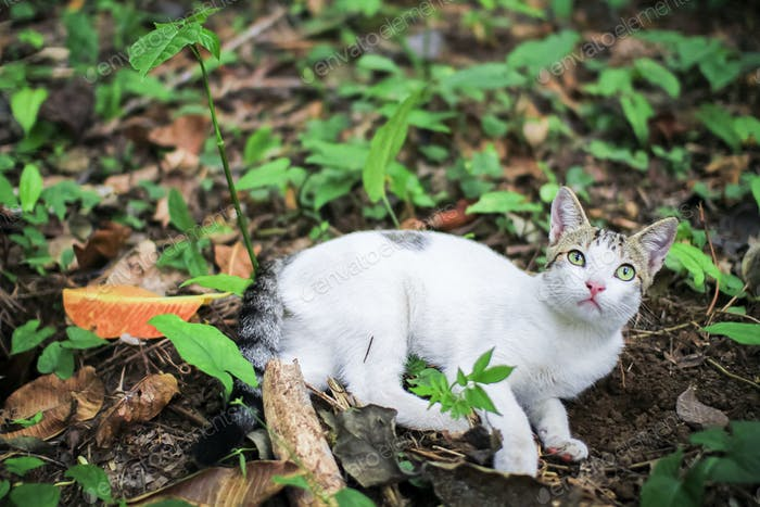 White Cat Laying on the Jungle Floor