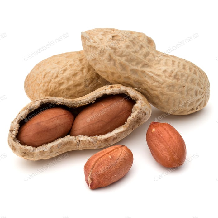 Opened and whole peanut or groundnut pod isolated on white background close up