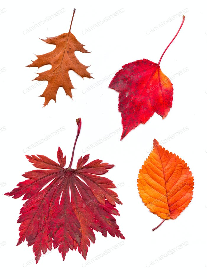 Bunte Satz von Herbstblättern. Sammlung schöne bunte aut