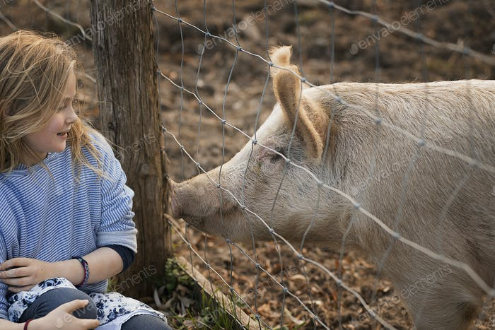 A pig in a paddock. Nuzzling against the fence for the attention of a young girl.