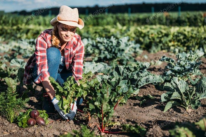 junge Landwirtin in Hut Ernte Rote Beete im Feld