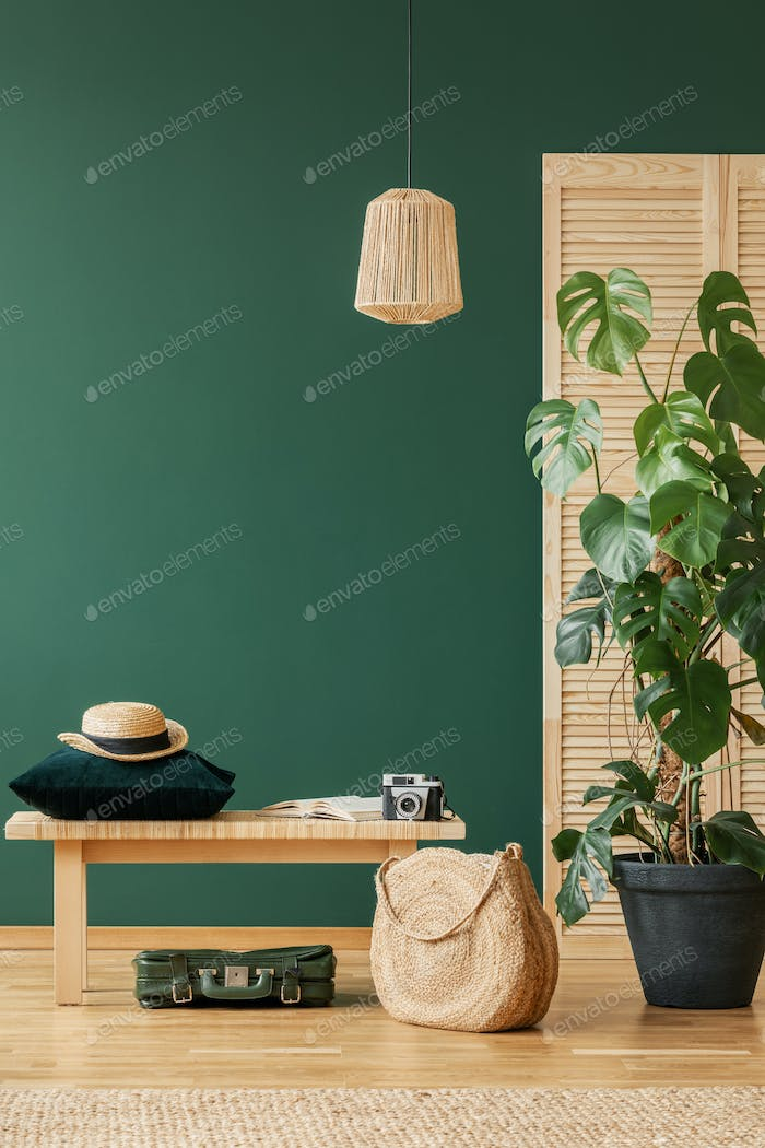 Lamp above wooden stool and bag next to plant in green flat interior with hat. Real photo