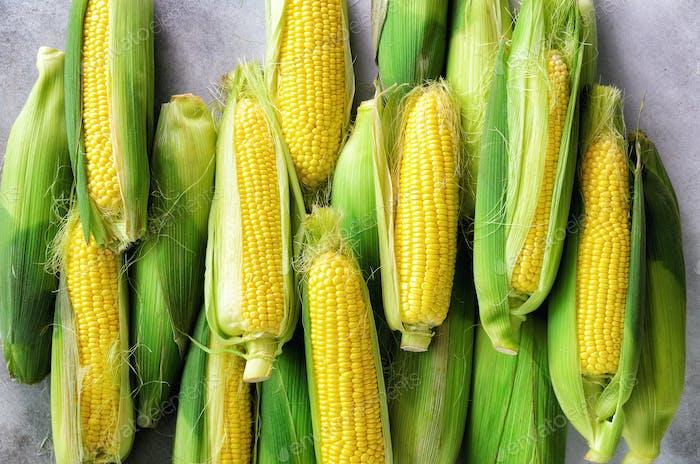 Frischer Mais auf Kolben auf hellgrauem Betonuntergrund, Nahaufnahme, Draufsicht, Kopierraum