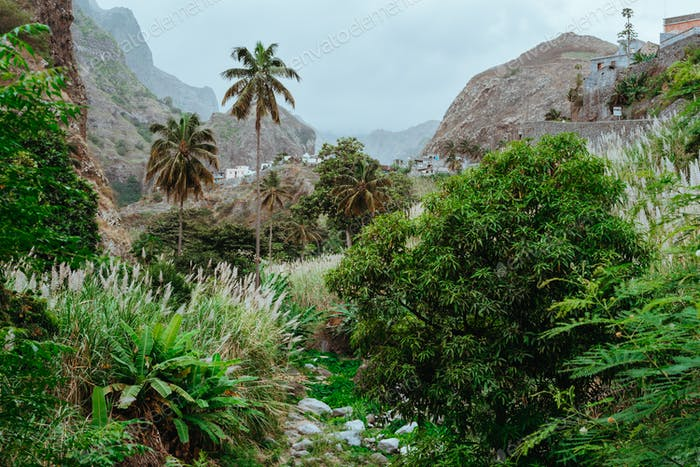Picturesque ravine and riverbed covered with lush vegetation of banana, mango trees, sugarcane and