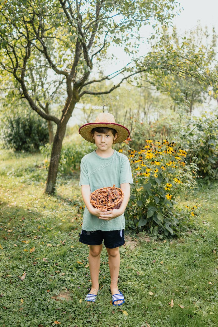 Boy holding basket of hazelnuts