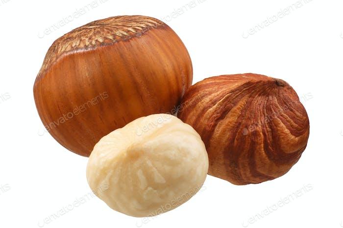 Hazelnuts coryllus avellana, paths