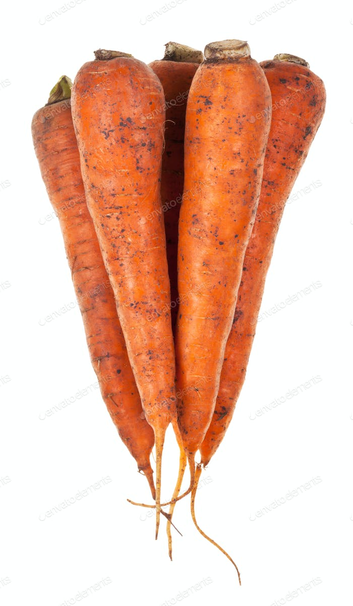 several fresh orange carrots
