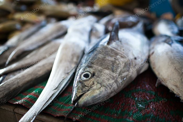 Close up of fish on display in a fish market (Muscat, Oman)