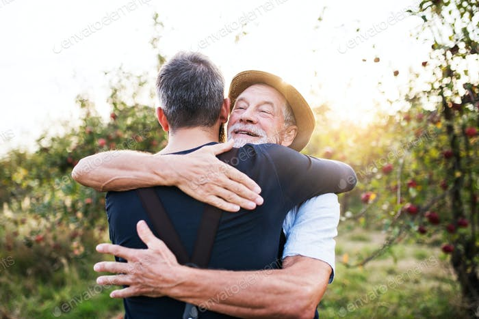 A senior man and adult son standing in apple orchard in autumn, hugging.