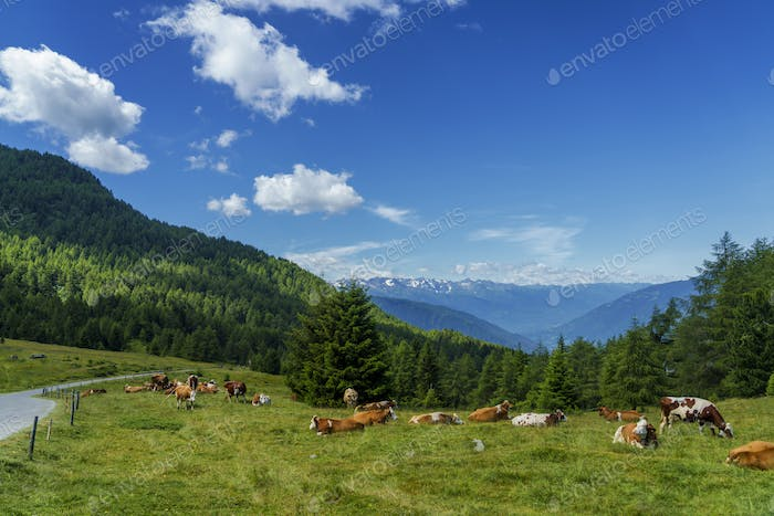 Mountain landscape at summer along the road to Mortirolo pass. Pasture