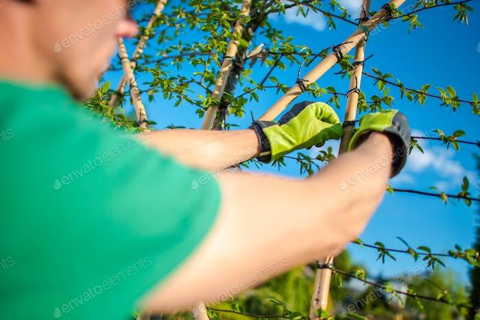 Gardener Creating Green Wall