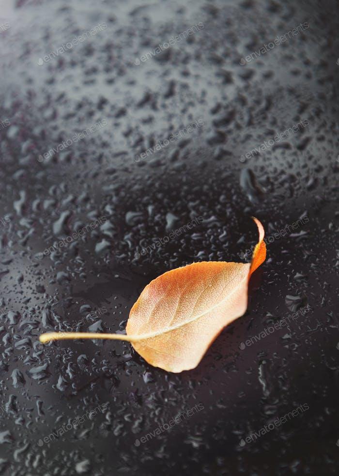 Ein gelbes gefallenes Blatt auf nassem dunklen Hintergrund