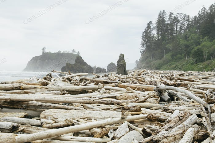 View of coastline and Ruby Beach, piles of driftwood in the foreground.