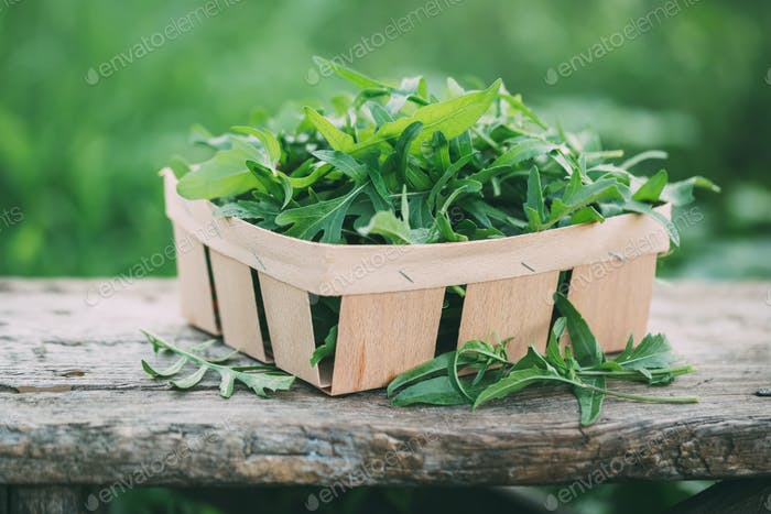 Freshly picked arugula in a garden.