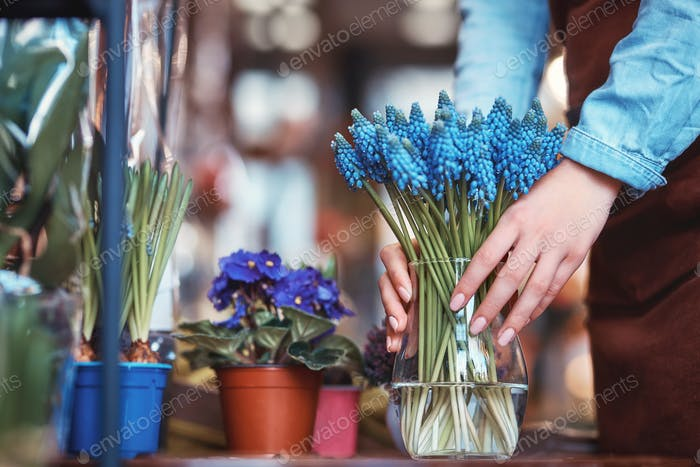 Female hands with muscari