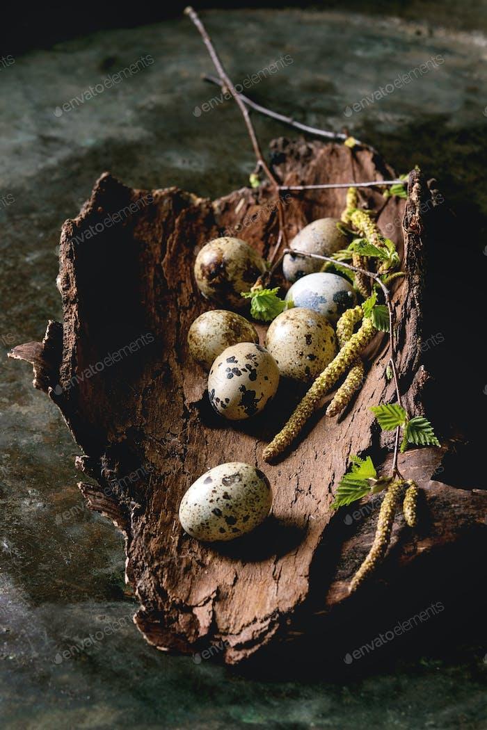 Quail Easter eggs in nest