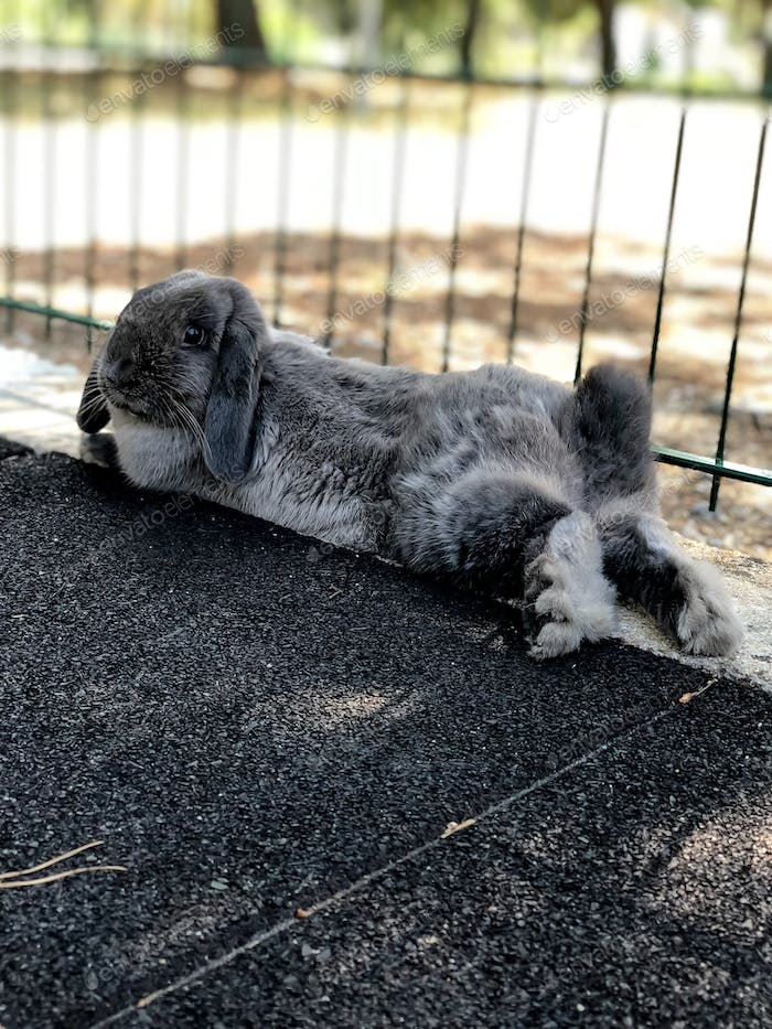 Cute bunny pet in a playground